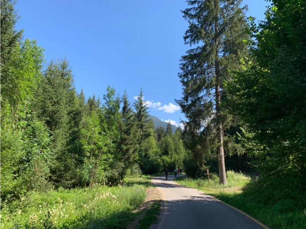 Pista ciclabile in mezzo agli alberi