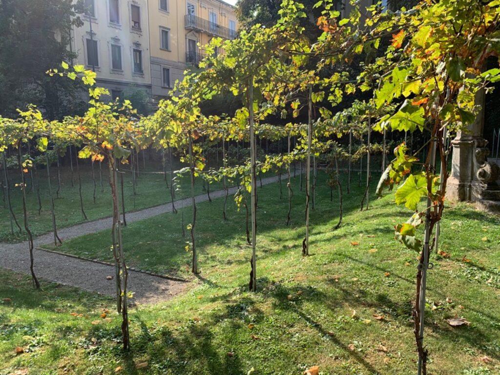 Filari di viti in un giardino