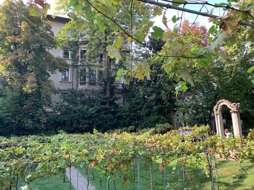 Vigna nel giardino di un palazzo